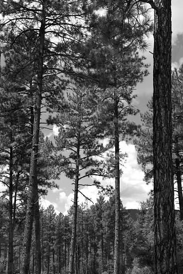 Beautiful nature and trails of Northern Arizona. photo