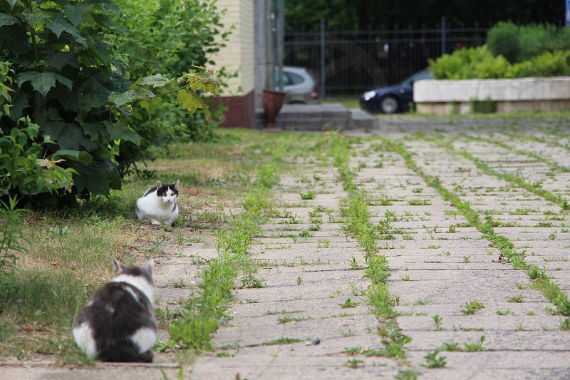park cats soviet postsoviet asphalt grey grass abandoned squares backgroumd poor photo