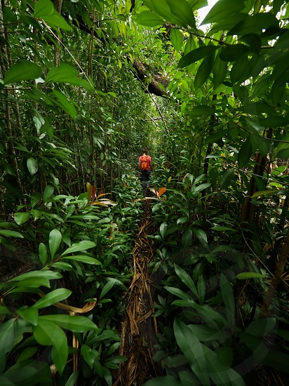 woman Walking down the green isle of the tropical green jungle adventure hike lifestyle environment hiking  photo