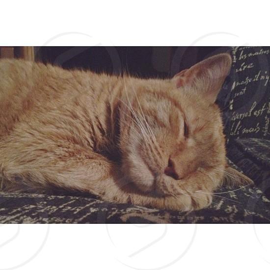 The lion sleeps tonight. photo