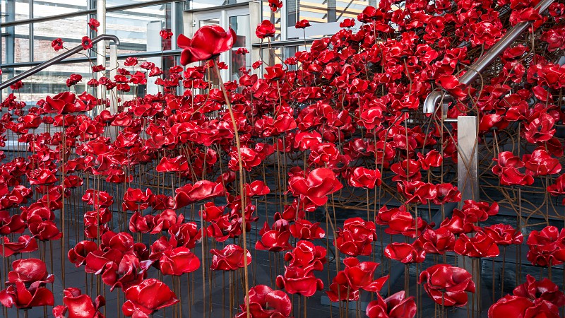 CARDIFF/UK - AUGUST 27 : Poppies Pouring out of the Welsh Assembly Building in Cardiff on August 27 2017 photo