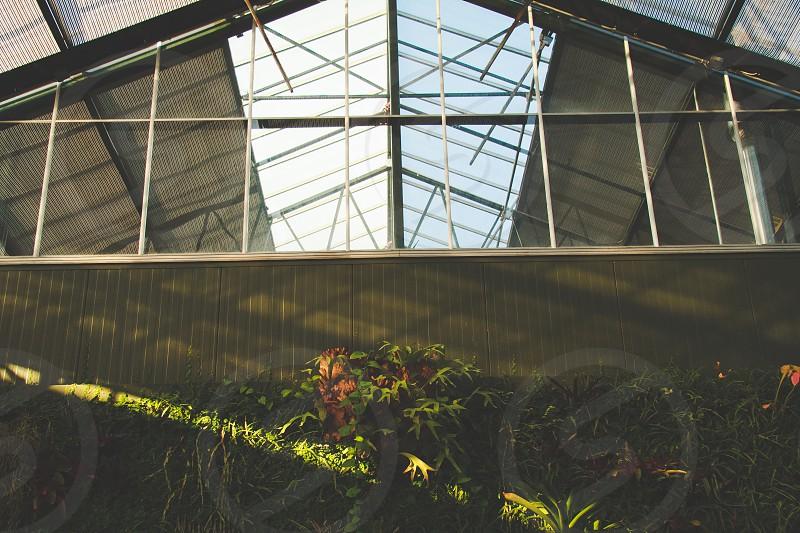 Foliage sunlight. photo