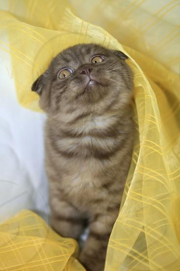 portrait of cute cat photo