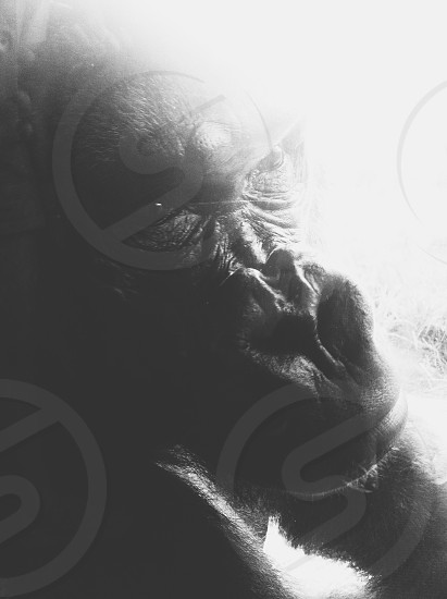 shallow focus photography of black monkey photo