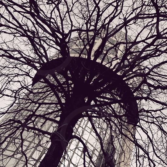 black trunk photo