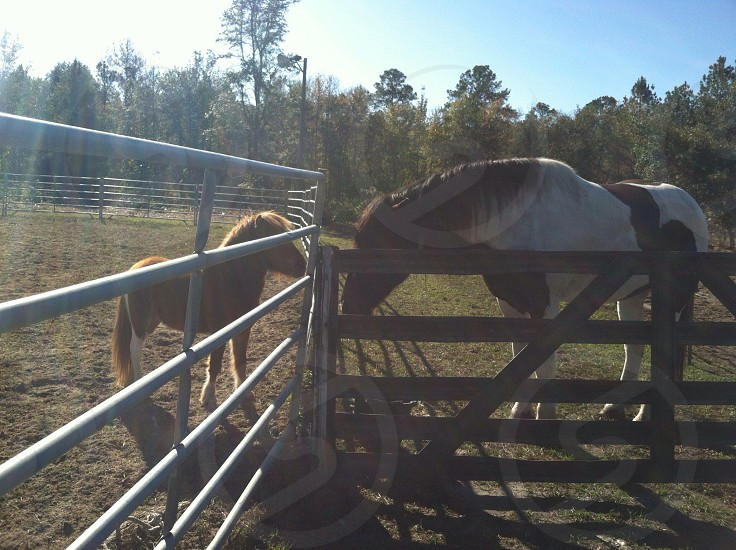 white and brown horse and brown pony standing photo