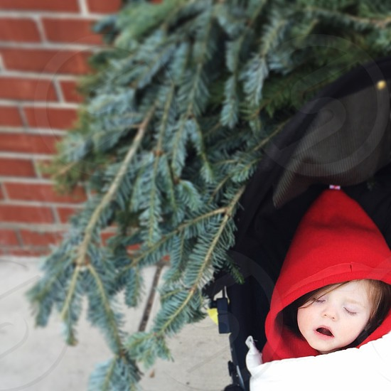 baby on stroller beside green tree photo