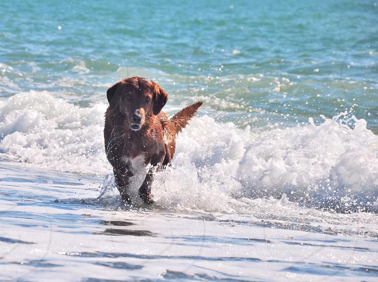 dog running on sea shore photo