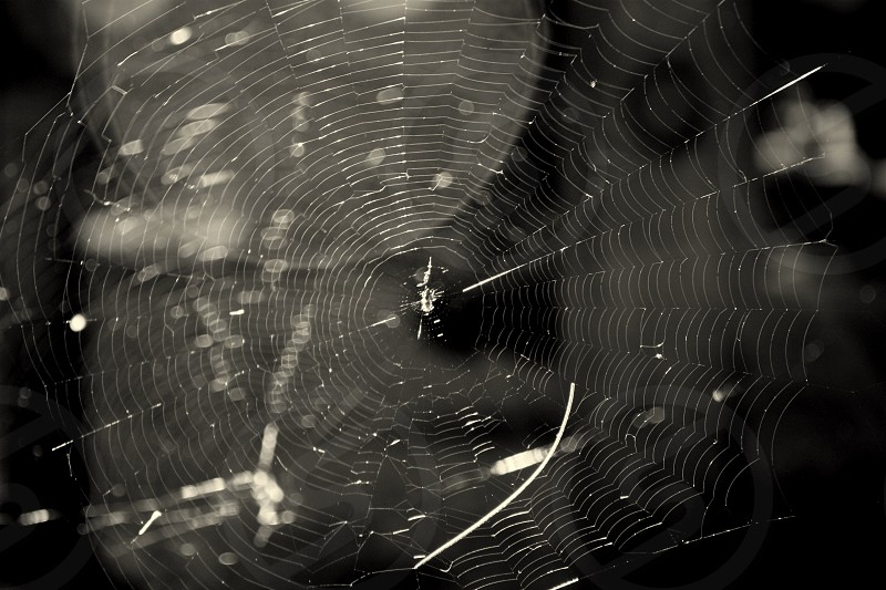 What a tangled web we weave... photo