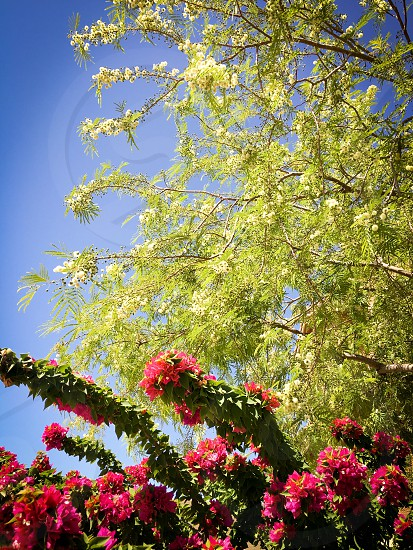 Spring flowers trees nature warmth Arizona  photo