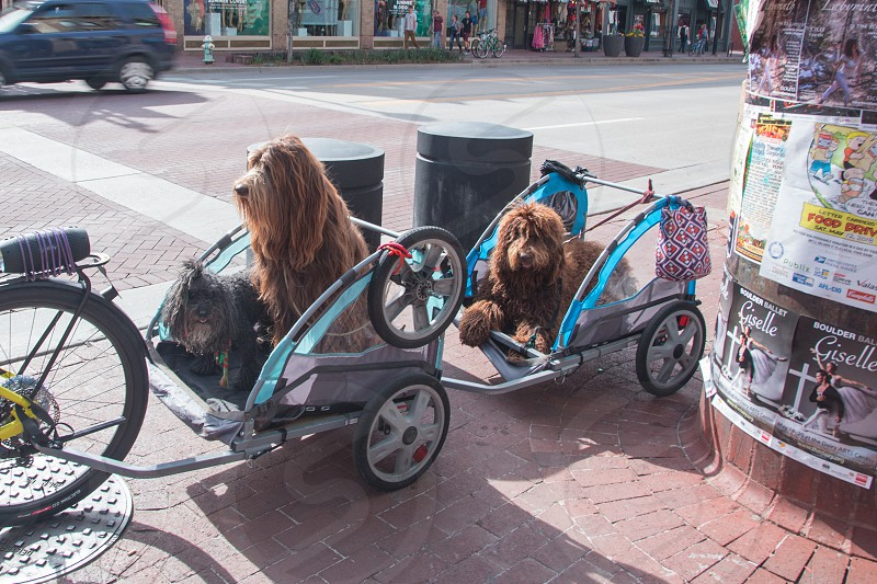 Dogs out for a ride. photo