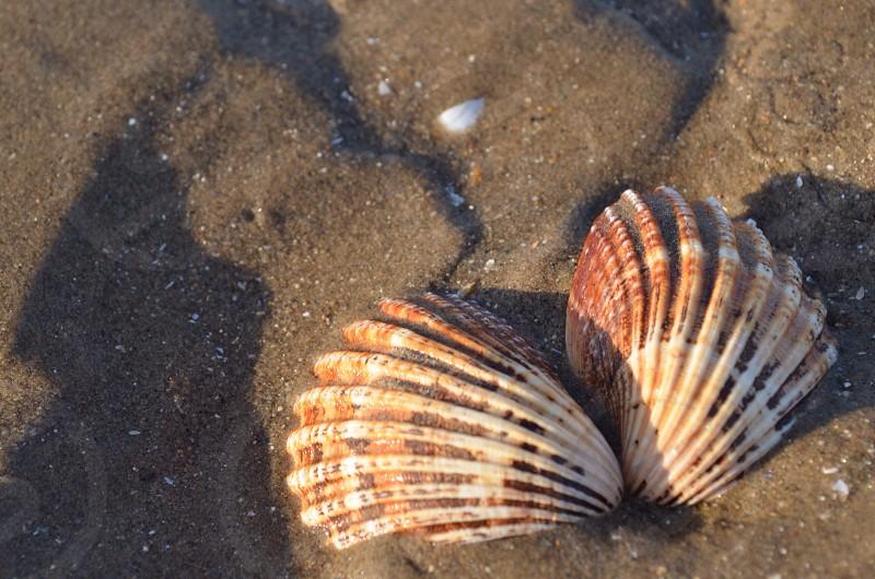 Shells on beach sand  photo