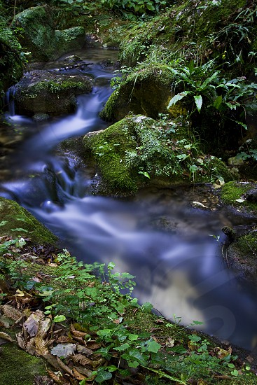 Stream in the woods Abruzzo Italy Serramonacesca Nature Water Green Leaves Mountains  photo