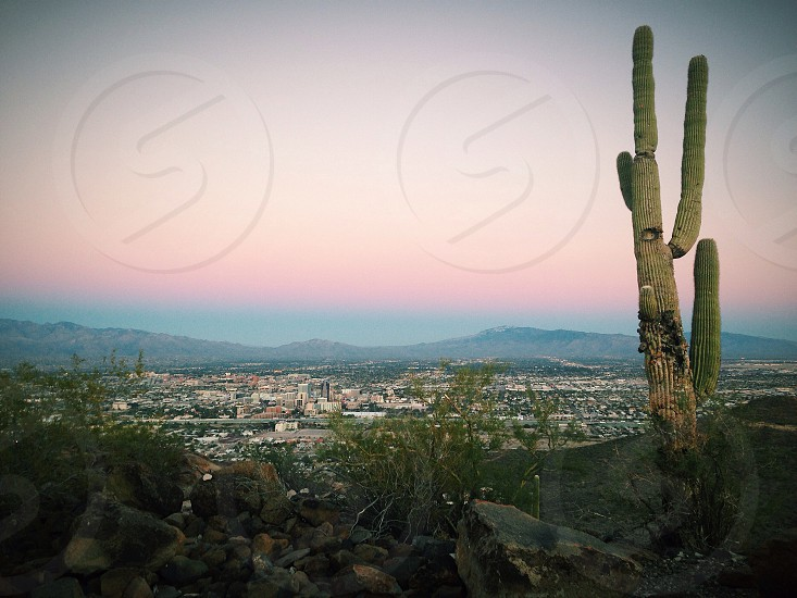 green cactus and city overview photo