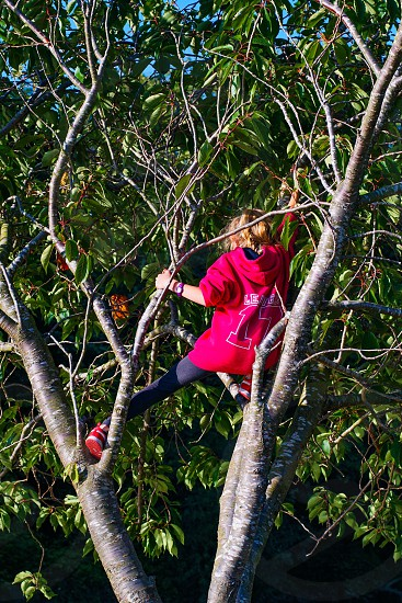 Girl with pink hoody sweater climbing on a tree  photo