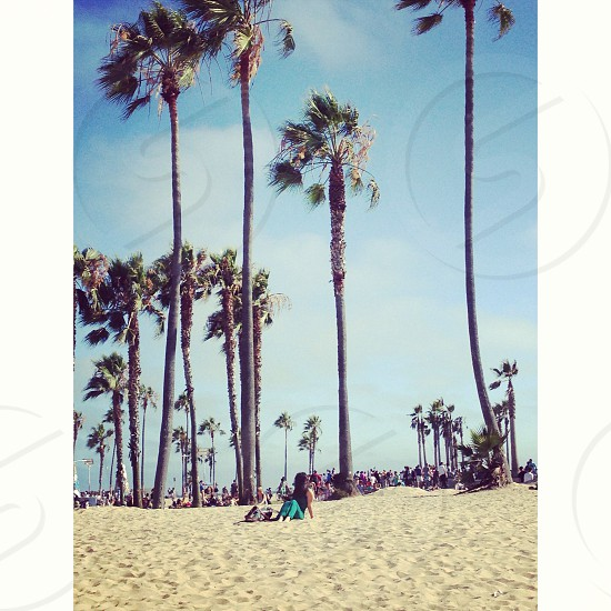 tall palm trees at the beach photo