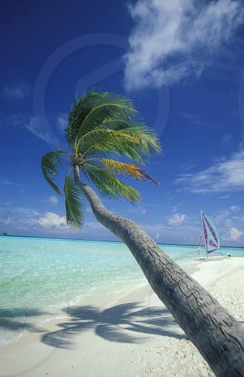 ASIA MALDIVES INDIAN OCEAN  ISLAND BEACH  COAST OCEAN PALM PALMTREE NATURE LANDSCAPE DREAMBEACH SANDY BEACH OCEAN COAST photo