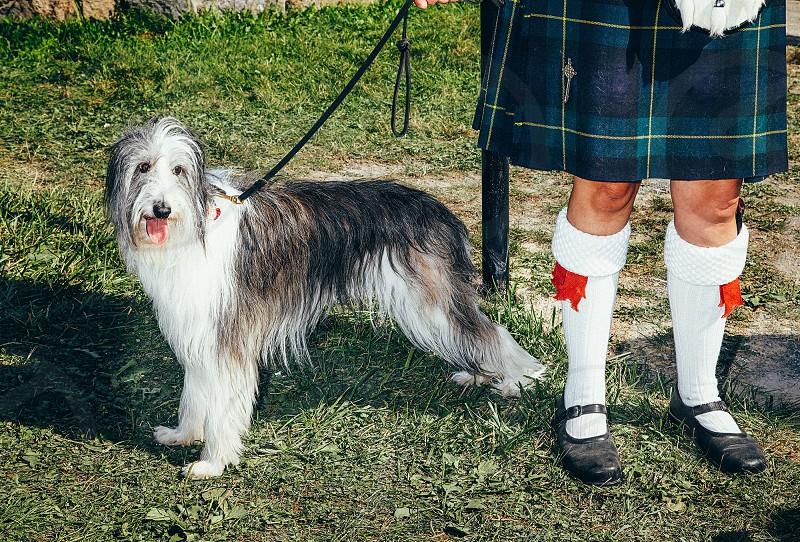 dog collie scottish pet owner leash photo