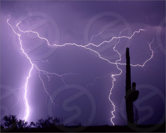 lightning night sky storm electric power thunderstorm thunder monsoon nature disaster cactus desert rain strike photo