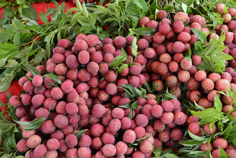 Lechee Fruits at the day Market in the city of Phuket on the Phuket Island in the south of Thailand in Southeastasia. photo