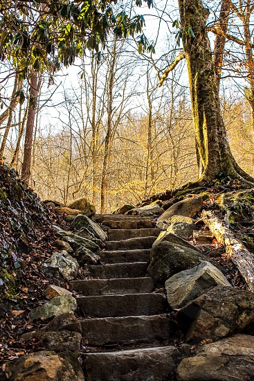 black and brown staircase passing through woods photo