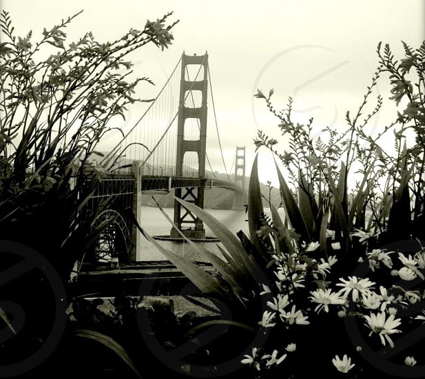 Outdoor day horizontal landscape black and white filter hazy bridge golden gate landmark attraction San Fran San Francisco Cali California USA America tourist tourism travel photo