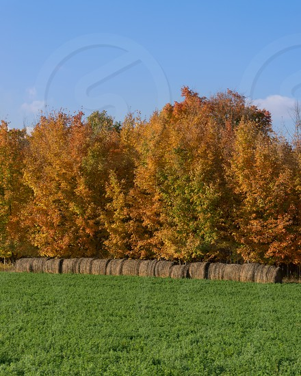 A beautifully colorful autumn day in the country.  Edits and full size images available. photo