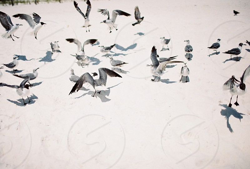 Birds gulls seagulls beach sand crazy flight photo