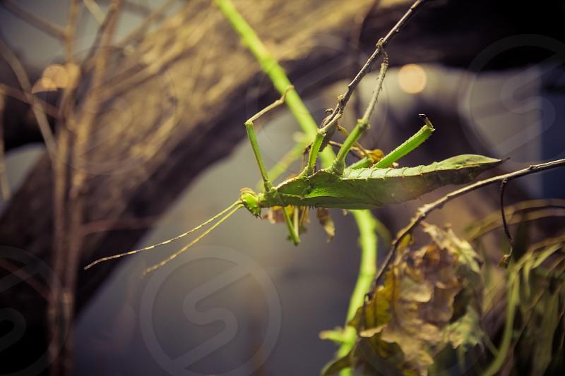 Mantis on a branch. Close up. Selective focus.  photo