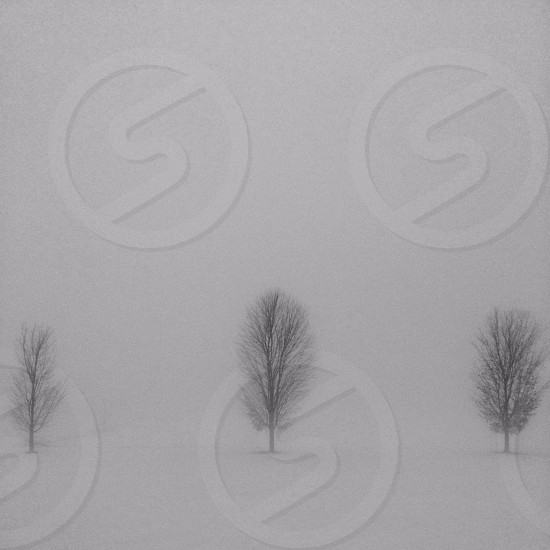 view of a 3 trees on a snow field photo