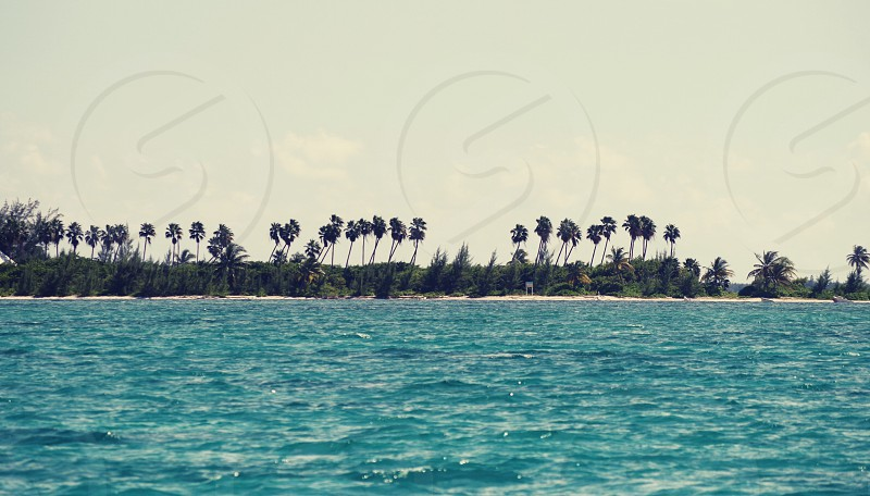 Paradise sand Caribbean water sea ocean Palm nature vacation travel fun sun outdoors blue sky Sky beach photo