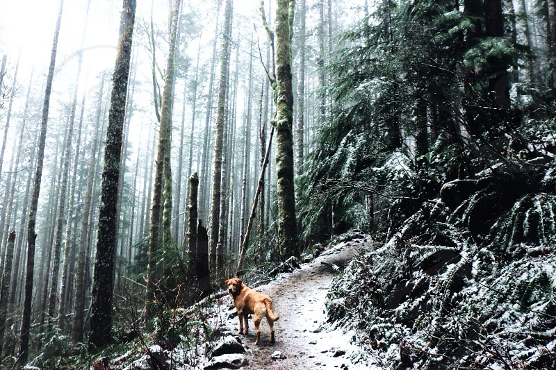 brown dog on snow covered forest photo