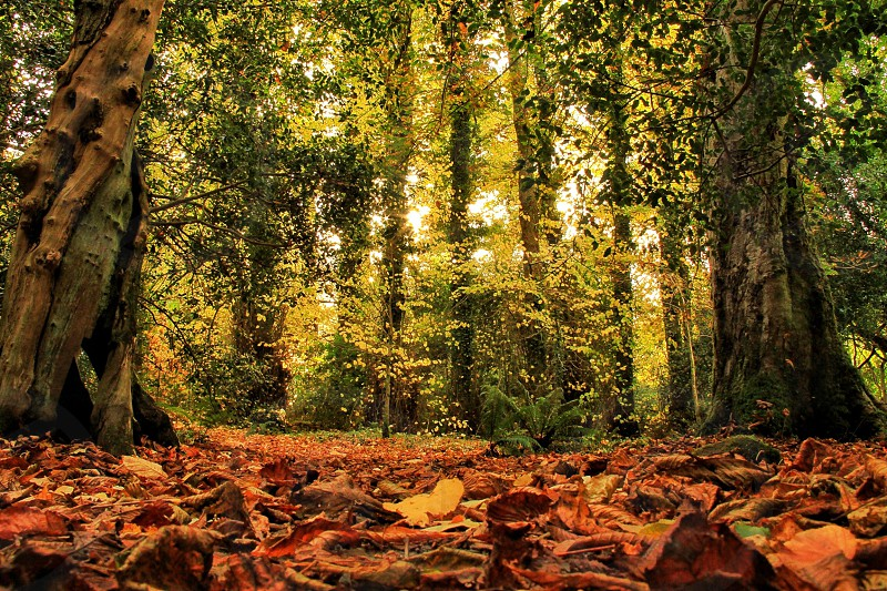 Leaves autumn woods forest trees yellow orange photo