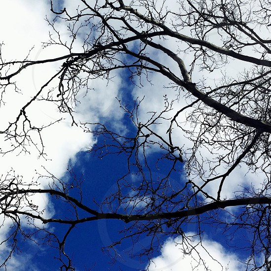 blue sky clouds budding branches spring buds  photo