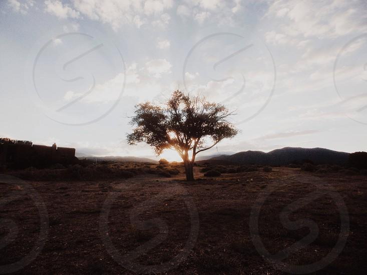 sun shining behind lone tree in desert photo