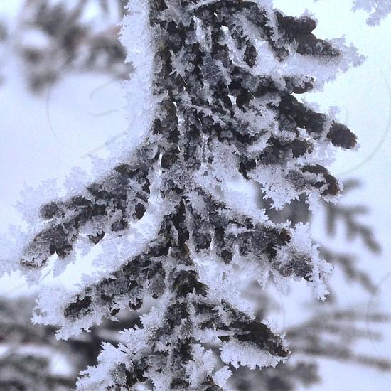 Winter beauty frozen frost on tree branch photo
