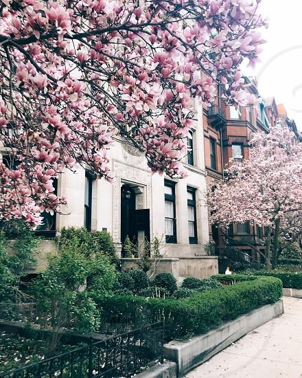 City Boston flowers trees spring photo