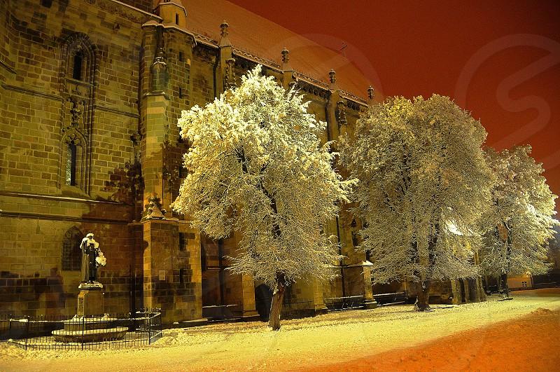 white tall tree photo