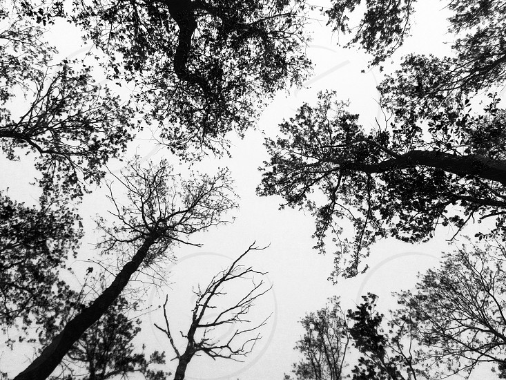 Trees in forest view from below photo
