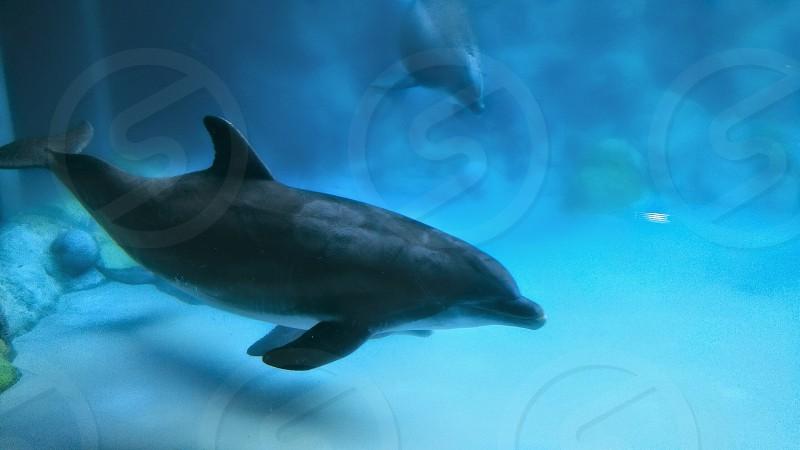 dolphin under water photo