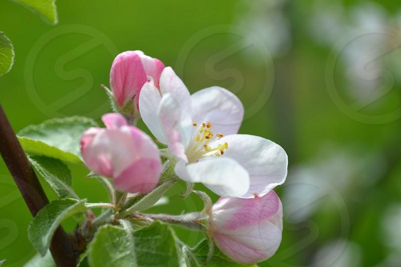 Flower Pink Flower photo