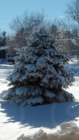 tree covered with snow under blue sky photo
