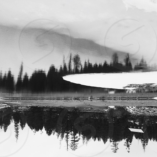 lake and trees grayscale photography photo
