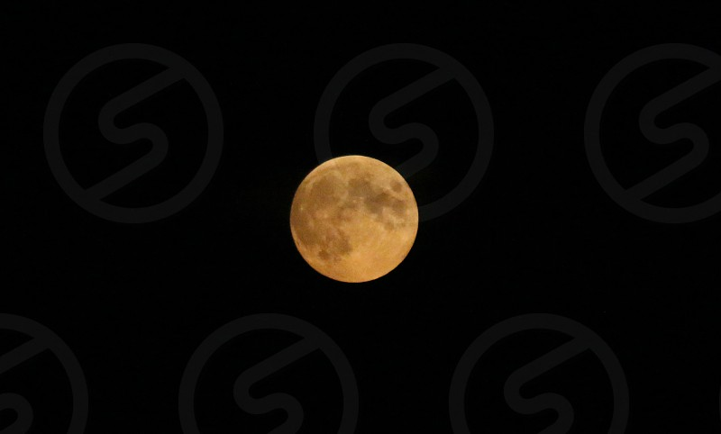 Halloween just isnt halloween without a full moon photo