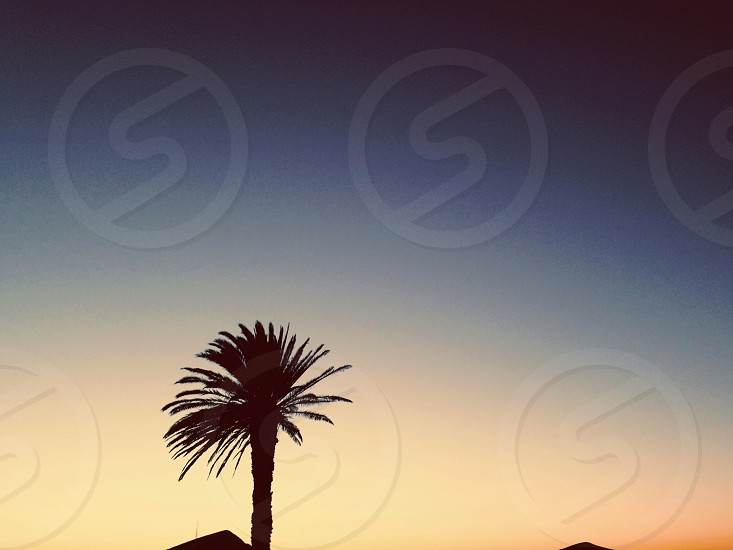 silhouette of fan palm tree photo