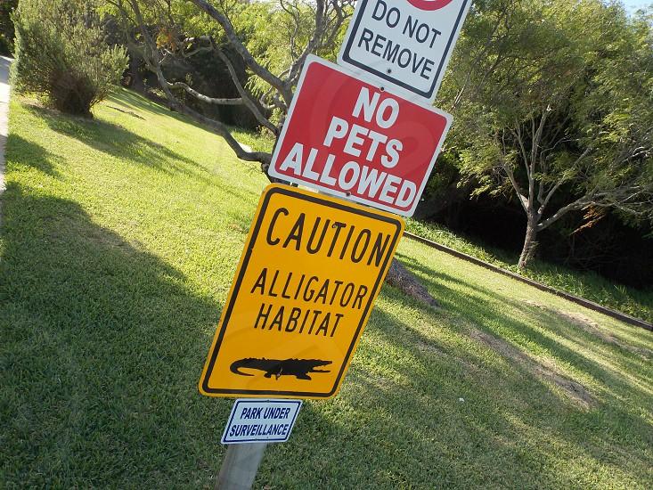 caution for alligators photo