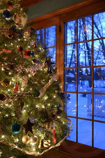 ChristmasTreeTraditionFamily photo