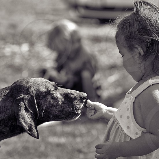 dog smelling the girl in white and pink sleeveless dress right hand photo