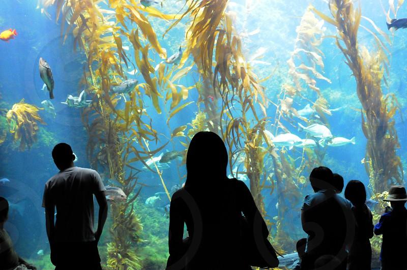 Visitors at the Birch Aquarium at Scripps Institution of Oceanography at the La Jolla shores in San Diego California photo