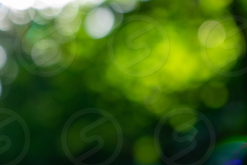 A natural blurred background of a bokeh made from green trees on a summer day. photo